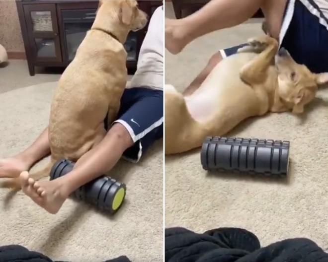 最初は我慢していたのに(左写真)…フォームローラーになりきっって飼い主さんにアピールする犬のリンちゃん(右写真)