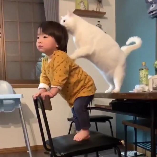 サムネイル 1才の男の子を優しく見守る白猫の姿が660万再生「ジブリの世界」「最高のシッター」