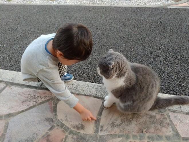 """サムネイル 【育児衝撃画像】保育園まで迎えに来てほしくて""""道を教える息子""""と""""真剣に聞く猫""""が「どっちもかわいい」"""