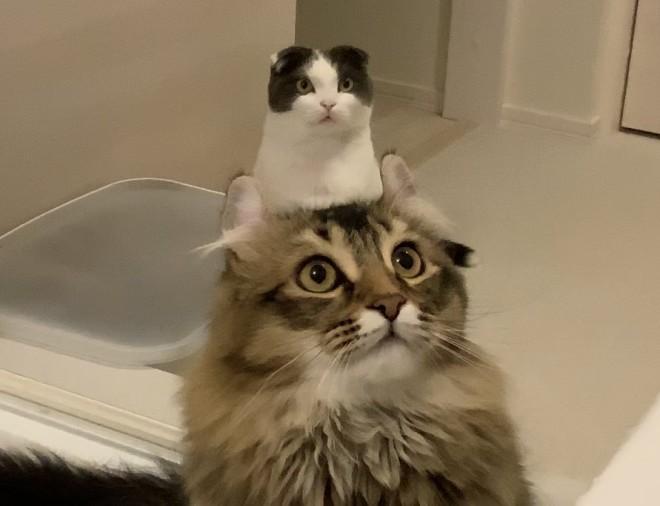 """サムネイル モフモフからのニョキッ…""""猫から生えた猫""""に反響「猫増産できる」「まさに奇跡」の声"""