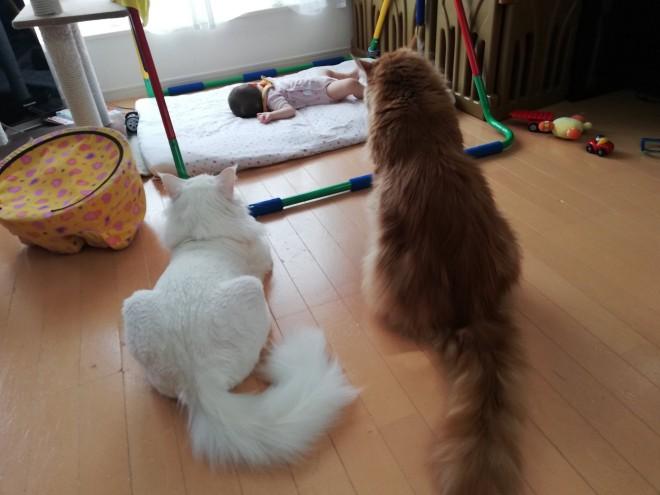 """サムネイル 「デカい猫にむっちゃ見守られてる」全身全霊で""""赤ちゃん""""を見つめる警備猫が頼もしい"""