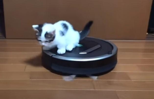 サムネイル 子猫がルンバを乗りこなす動画に再生450万超え 「一挙手一投足全てかわいい」