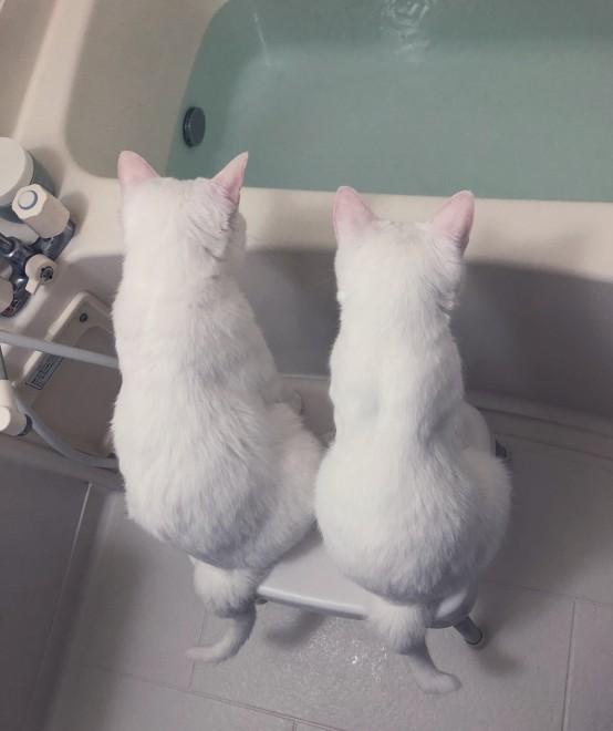 """サムネイル 「背中だけで物語を感じてしまう…」元保護猫兄弟の""""お湯張り観察中""""の会話とは?"""