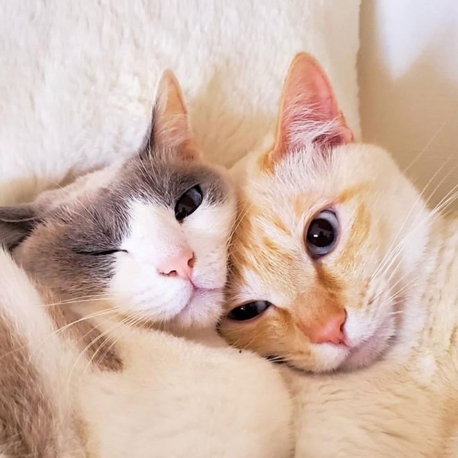 サムネイル 「初めて見る愛猫の顔」「あふれ出る野性味」ねずみのオモチャに無心でかぶりつく姿に反響