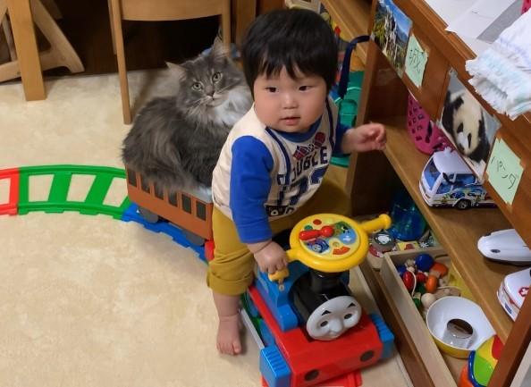 """サムネイル 【天使キッズ】愛猫乗せる""""小さな運転手""""に反響「速度、乗客、運転手…すべてが癒しなことってあるんだ」"""
