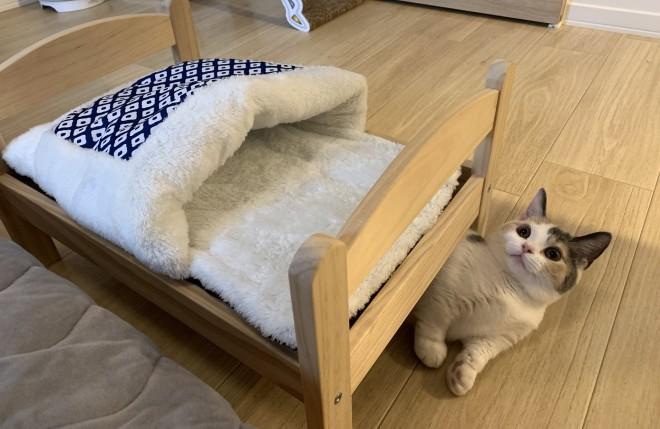 サムネイル 寒い日は猫も布団が恋しいはずでは? ニアミス写真に「うちも同じ」「ちょうど無念を味わってた」
