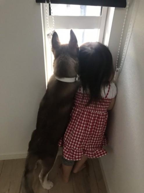 4ヵ月前は娘さんと同じくらいの背丈だったハスキー犬・せなちゃん(画像提供:@yu_vell30)