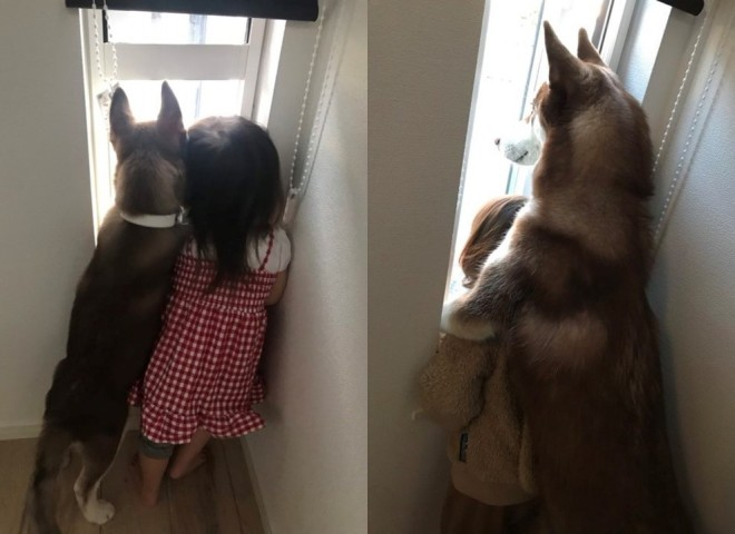 サムネイル 幼馴染がいつのまにか保護者に? 驚くべき成長スピードを見せるハスキー犬の姿に「心惹かれました」