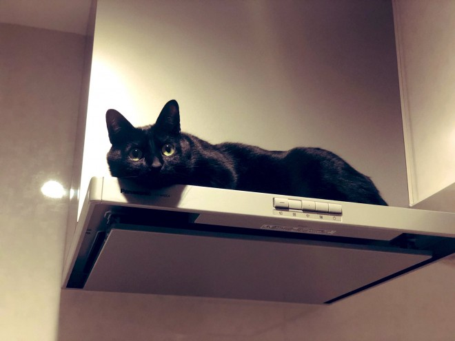 """サムネイル レンジフードの上に鎮座するキッチンの神様? 神秘的オーラを出す""""黒猫様""""の正体とは"""