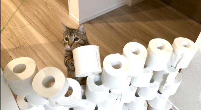 シンバ君が自分でトイレットペーパーを積んでいるように見える不思議な写真