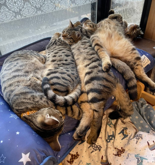 サムネイル 暑いのに密集した猫たちに「生まれ変わって冷感マットになりたい」「めっちゃ密!」