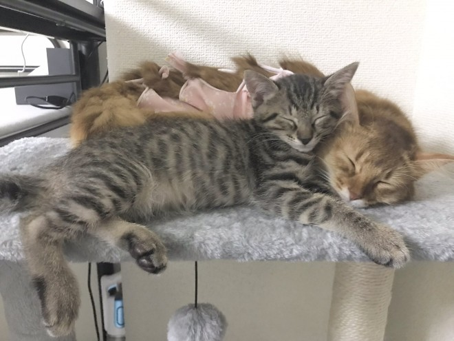 仲良く重なって寝るしぴちゃんとおこめちゃん