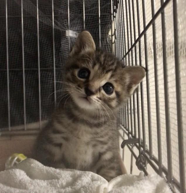 サムネイル 警官の心を盗んだ罪? 職質でカバンから出てきた子猫に思わず「かわいい〜」