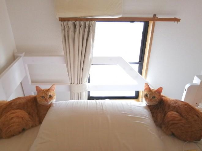 """サムネイル シンクロする2匹の茶トラの左右からの""""ごはん圧""""に「狛猫?」「鏡ではございませんね?」"""