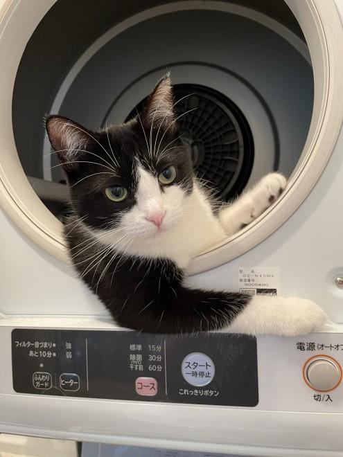 サムネイル 乗ってくかい…? 乾燥機から現れたイケメン猫に「け、ケッコンしてください!」