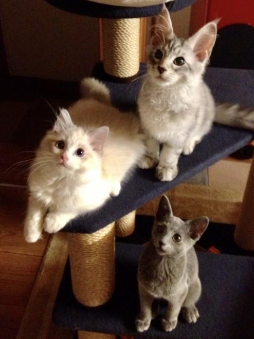 仔猫の頃の3匹
