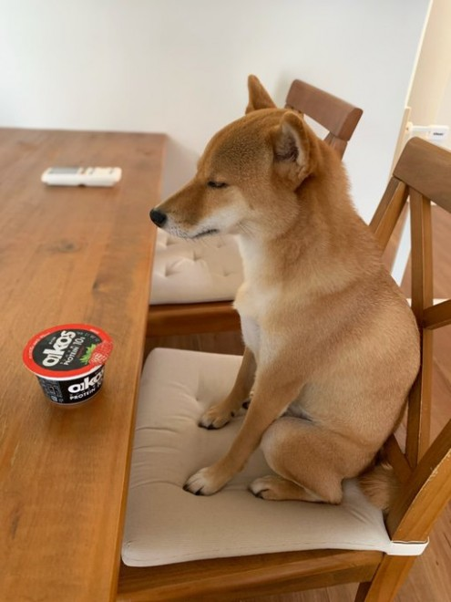 サムネイル 人間の煩悩が犬にも…? 修行僧のように座る柴犬に反響「悟りを開いた顔」「念力で開けようとしてる」