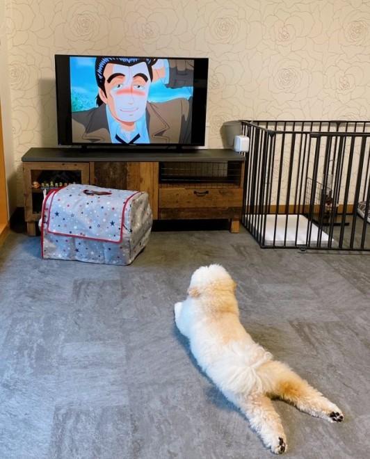サムネイル 夏休み中の小学生のよう…ゴロ寝しながらアニメを見る犬に反響「人間が中に入っているんですか?」