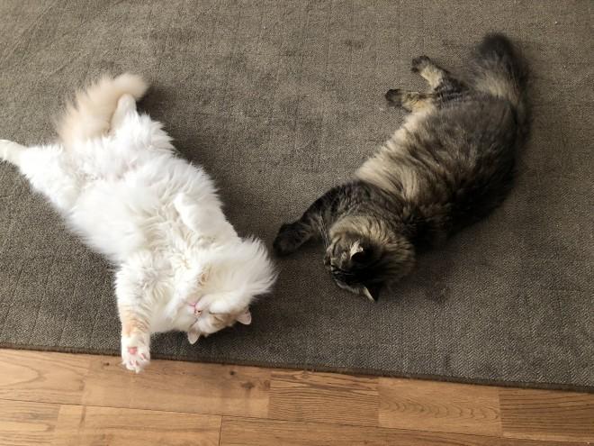 アポロとチロル(右)
