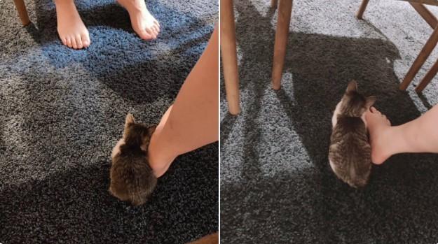 サムネイル 子猫の1ヵ月の急成長っぷりに「かわええ尊い」「愛おしすぎる」 大学生2人が初めての保護猫育てに奮闘